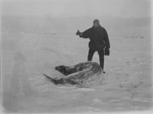 Capt Colbeck and a Weddell seal