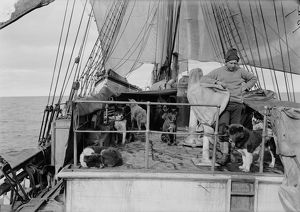 Cecil Meares and dogs on deck of Terra Nova. January 3rd 1911.