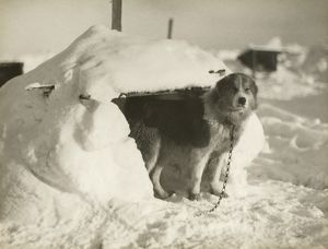 A dog kennel made of snow and ice