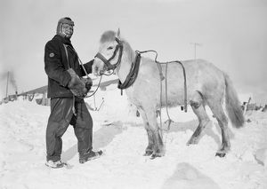 british antarctic expedition 1910 13 terra nova/petty officer edgar evans pony snatcher