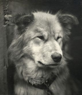 Portrait of the dog named Sue