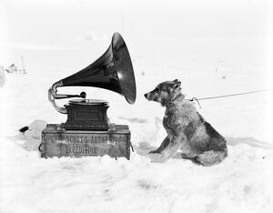 british antarctic expedition 1910 13 terra nova/sledge dog chris gramophone