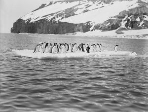 british antarctic expedition 1910 13 terra nova/george murray levick/adelie penguins ice floe