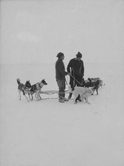 antarctic relief expeditions 1902 04/dog team
