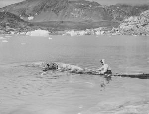 british arctic air route expedition 1930 31/learning roll kayaks