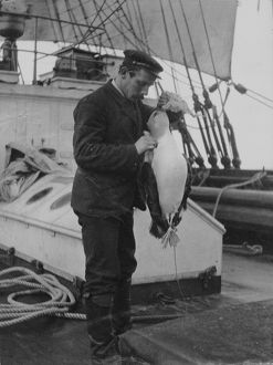 antarctic relief expeditions 1902 04/lt england dead molly mawk