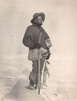 british national antarctic expedition 1901 04/royds albino penguin