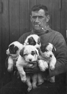 imperial trans antarctic expedition 1914 17/tom crean pups